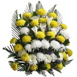 鲜花礼品-执着