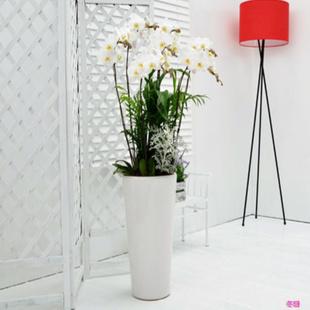 网上花店-蝴蝶兰