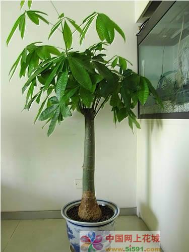 鲜花快递网-发财树10