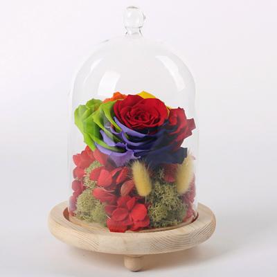 dinghua-玻璃罩彩虹花 红绣球