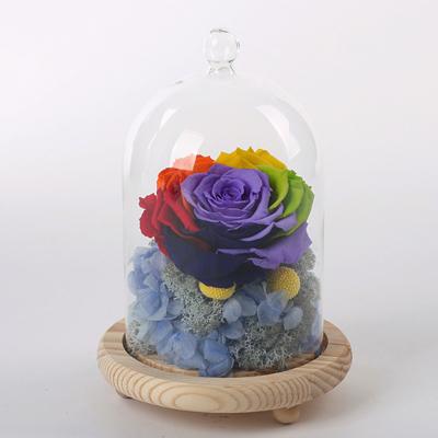 兰之馨永生花:玻璃罩彩虹花 蓝绣球